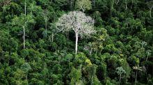 Brasil foi responsável por um terço da perda de florestas virgens no mundo em 2019, diz relatório