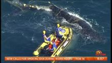 Whale rescue mission