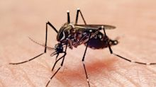 Dengue virus outbreak reported in Cuba: What you need to know before travelling this winter