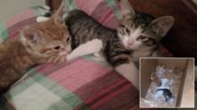 Woman Rescues Four Kittens Left In Cardboard Box During Snowstorm