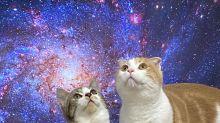 老被擋電視主人奇招應對 貓咪瞬間成宇宙主宰:一起來喵星吧