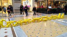 Cani gialli marciano in Galleria: i cuccioli che incuriosiscono Milano