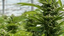 Charlottetown seeking public feedback on marijuana bylaws