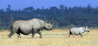 World Rhino Day: Africa's rhino conservation in the time of coronavirus