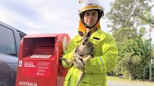 Joey found stuffed into Australia Post box