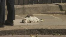 Larry the cat enjoys sunshine in Downing Street