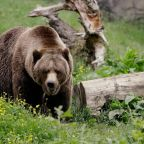 Grizzly kills hunter in attack that's first of its kind at Alaska park, officials say