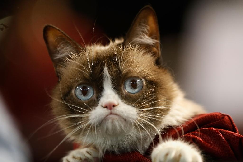 Internet sensation Grumpy Cat, seen here at the MLB game between the Arizona Diamondbacks and the San Francisco Giants, in 2015, has died at the age of seven (AFP Photo/Christian Petersen)