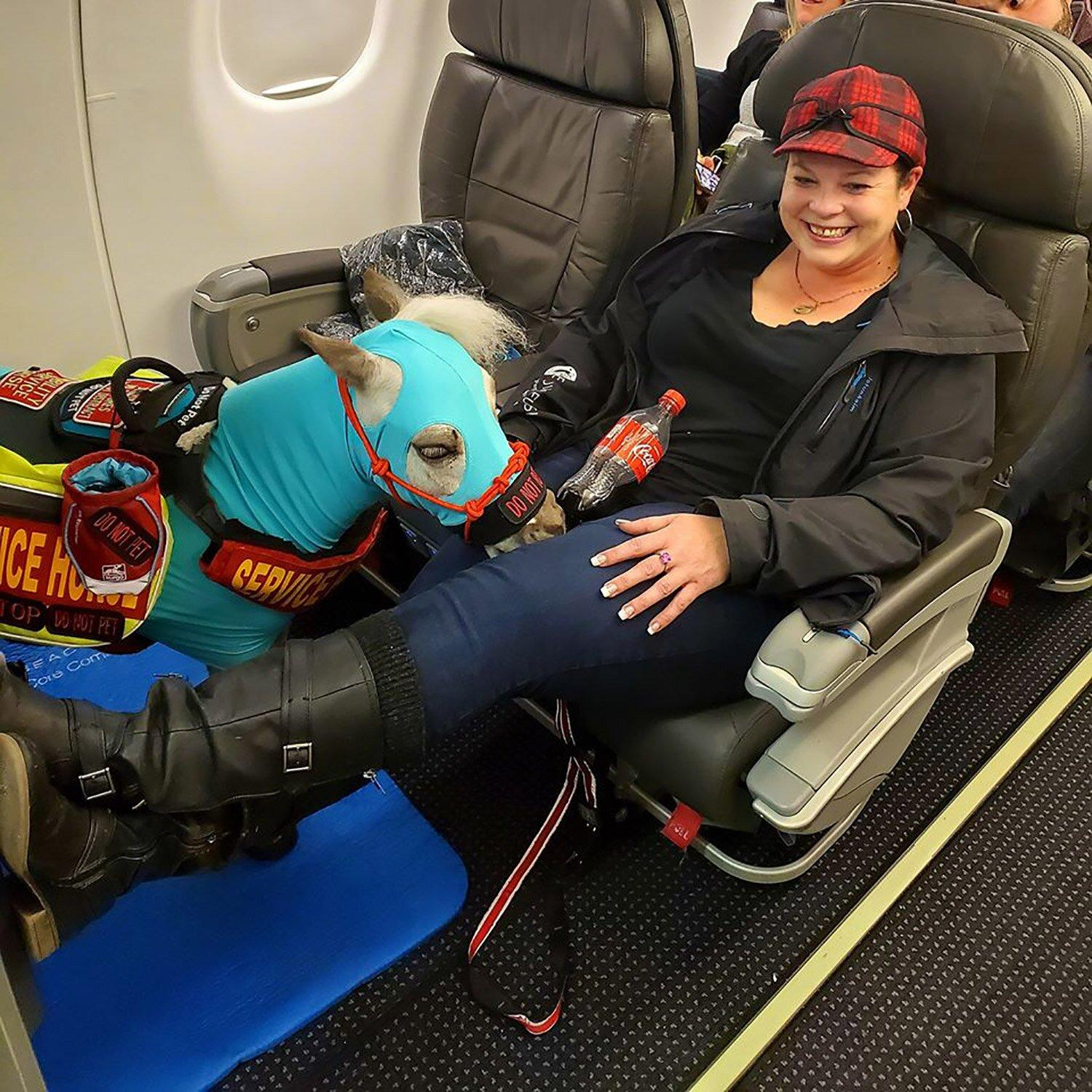 Michigan Woman Brings Miniature Horse on Plane as Her Service Animal: 'He Is So Bonded with Me'