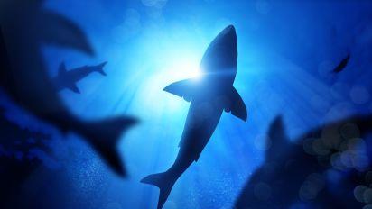 Man killed in shark attack off Hawaii coast