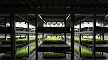 Ocado Invests in Indoor Farming in Step Beyond Grocery Tech
