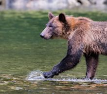Many Among Us Can Relate to the Thirsty Bear Who Made a Liquor Store Pit Stop