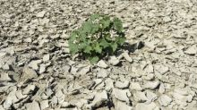 Klima-Konsortium will Fake News entgegentreten