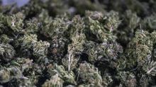 Bouches-du-Rhône: Trois tonnes de cannabis découvertes sous les tomates d'un camion au péage d'Arles