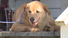 Missing dog turns up almost 60 miles away at owner's old house