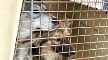 Animals seized by SPCA returned to Alberta man who's still facing charges