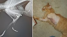 Woman shares horrific warning after pet cat shot