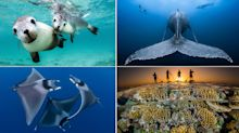 Awesome underwater images reveal natural beauty of ocean wildlife
