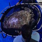 Global organization created to help sea turtles