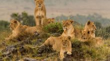 Nine of the best places to stay in Africa for incredible lion encounters