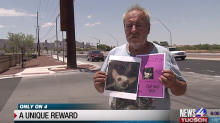 Man offers a 1-bedroom home to anyone who can reunite him with lost dog: 'She's part of my family'