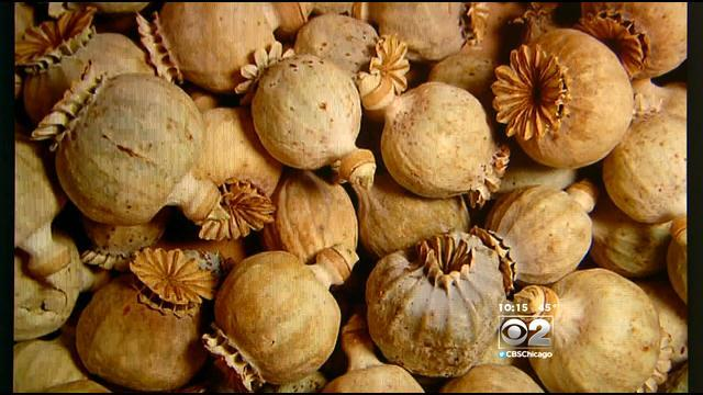 2 Investigators: Poppy Sale Lands Chicago-Area Man In Legal Trouble
