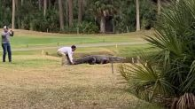 'No cure for stupid': Man taunts alligator on golf course