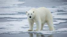 Highest-ever temperature recorded in Norwegian Arctic archipelago