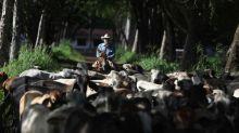 REPORTE ESPECIAL-Un ganadero brasileño trata de hacer lo correcto por el Amazonas y no lo consigue