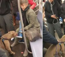 Pit Bull Seen Clamping Down on Subway Rider's Foot in Harrowing Video