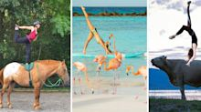 21 Animals Who Are Perfect Yoga Companions
