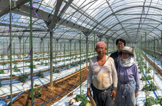 Google AI builds a better cucumber farm