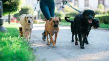 Verletzungsgefahr: Das sollten Hundebesitzer bei Leine und Halsband beachten