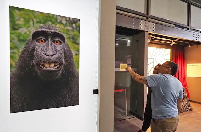 A 'monkey selfie' movie might be on the way