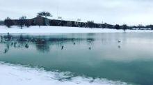 Waterfowl Fly Across Lubbock Lake After Heavy Snowfall