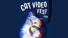 如果香港有個貓咪電影節……
