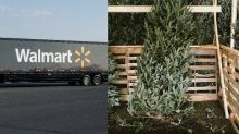 Walmart Will Now Deliver a Live Christmas Tree to Your Door for No Additional Cost