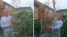 Green-Fingered Window Cleaner Accidentally Grows 'World's Tallest Dandelion