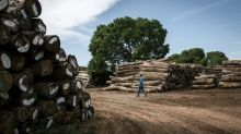 Mozambique battles illegal logging to save tropical forests
