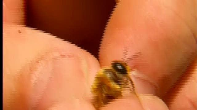 Bee Keepers in Ohio jump 20%