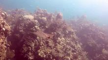 Divers explore the magical underwater world of Roatán, Honduras