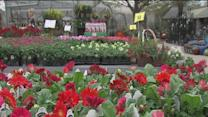 Colder temperatures could impact plants