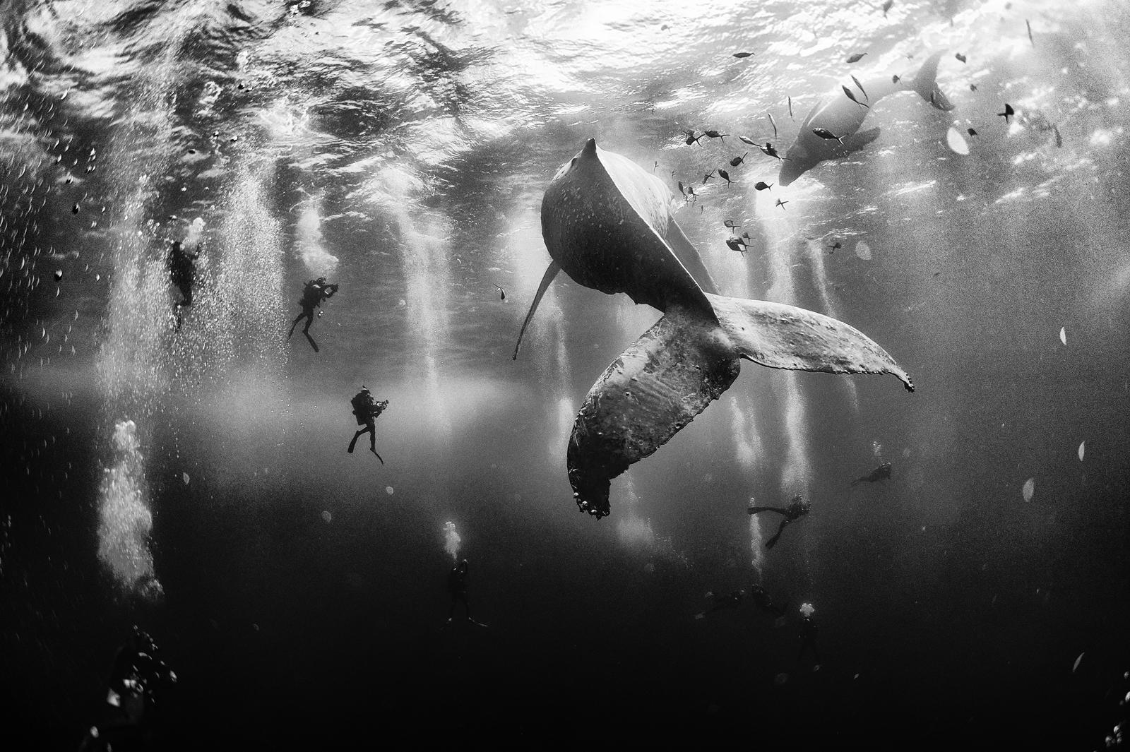 """<p>""""This was taken while diving with a humpback whale and her newborn calf while they cruised around Roca Partida in the Revillagigedo Islands, Mexico,"""" says Floriuk. """" This is an outstanding and unique place full of pelagic life, so we need to accelerate the incorporation of the islands into UNESCO as anatural heritage site in order to increase the protection of the islands from the prevailing illegal fishing corporations and big-game fishing.""""</p>"""