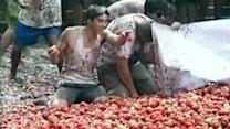 """""""War of the Tomato"""" in Chile"""