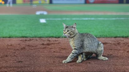 Stray cat receives MVP chants in the Bronx