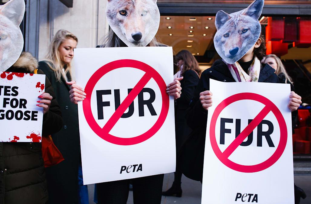 Photos of the Day: Wed Rather Go Naked Than Wear … Wool?   PETA