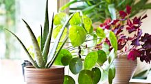 Best places to buy plants online in the UK