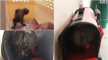 Woman fined for abandoning neglected poodle beside rubbish bin