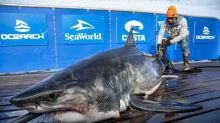 Stormy weather brings shark research crew to P.E.I. waters
