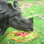 Rhinoceros enjoys cake made of fruit and vegetables on World Rhino Day in Thai zoo